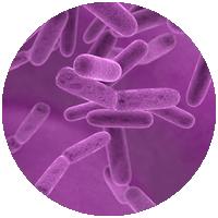 Listeria monocytognes BAX System PCR Hygiena Colombia